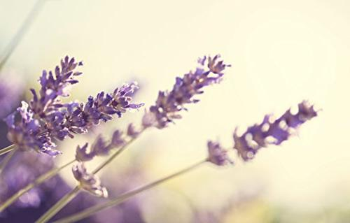 Premium Organic Lavender Essential Oil | Imported From France 100% Pure | Undiluted Therapeutic | | Lavandula Hair, and Care