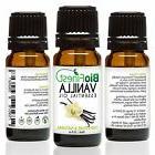 BioFinest Vanilla Oil - 100% Pure Vanilla Essential Oil -Bal